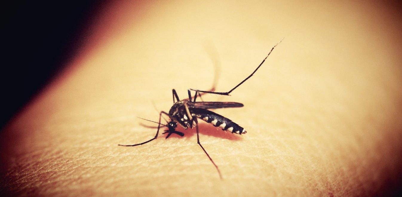Εθνικός Οργανισμός Δημόσιας Υγείας: Πώς να προφυλαχθείτε από τα κουνούπια και τον ιό του Δυτικού Νείλου