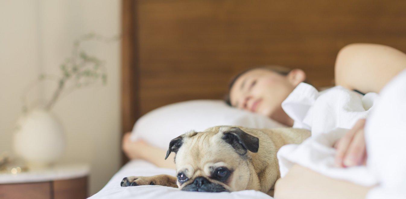 Έρευνα: Οι γυναίκες κοιμούνται καλύτερα με σκύλο παρά με άνθρωπο