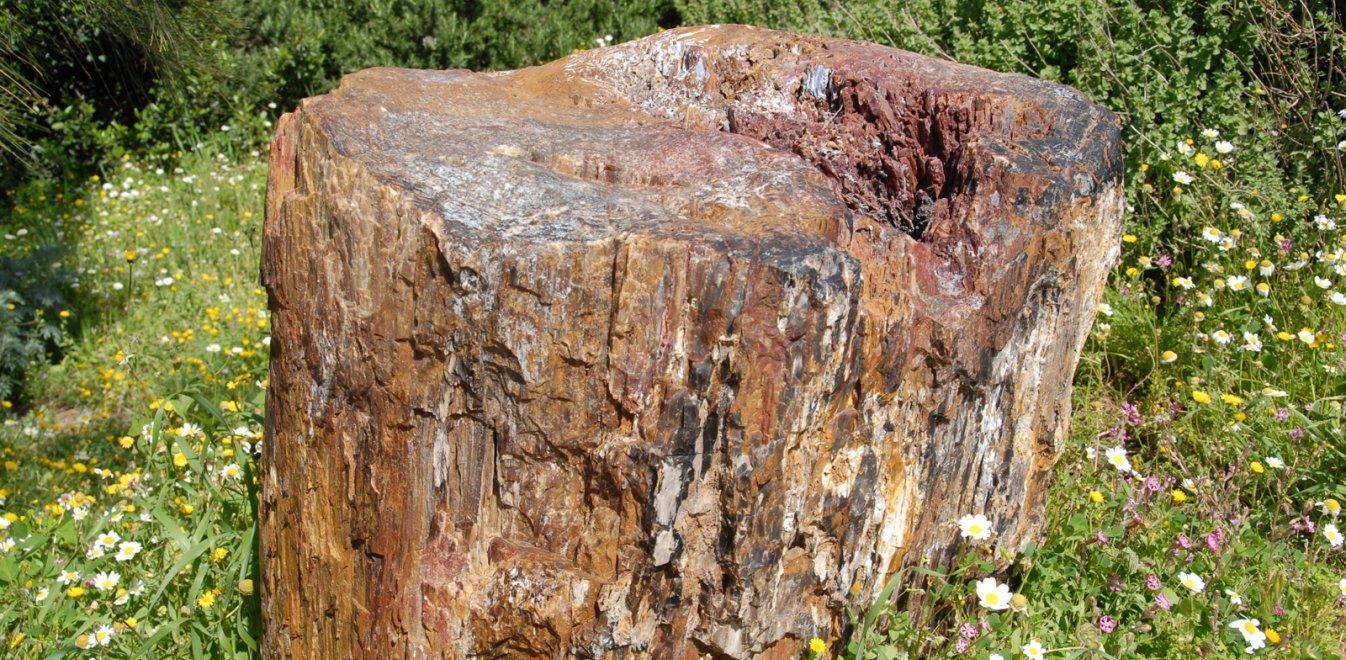 2 τύπους απολιθωμάτων