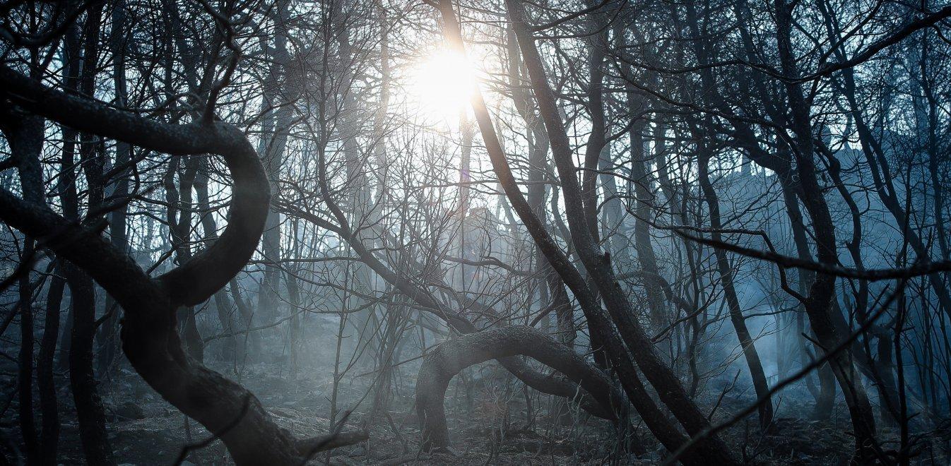 Φωτιά τώρα στην Εύβοια: Εικόνες Αποκάλυψης την επόμενη ημέρα (pics)
