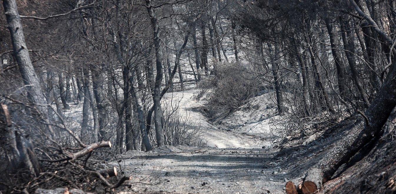 Αποκάλυψη του OPEN TV για τη φωτιά στην Εύβοια: Αυτά είναι τα τρία σημεία του εμπρησμού (vid)