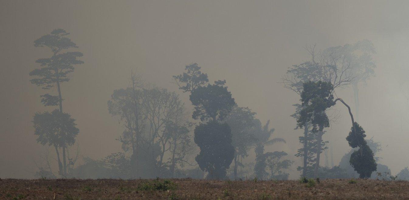Αμαζόνιος: Η ζήτηση για βοδινό και σόγια καταστρέφουν το δάσος