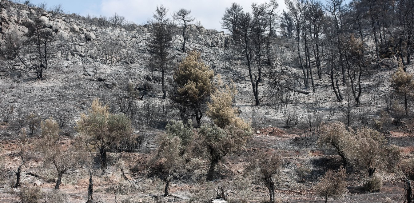 Φωτιά στην Εύβοια: Την άρση του τηλεφωνικού απορρήτου των υπόπτων για εμπρησμό ζητούν οι Αρχές