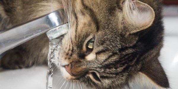 5dedf7da0485 Αυτή η γάτα κάνει μπάνιο μόνη της με ζεστό νερό (vid) (pixabay)