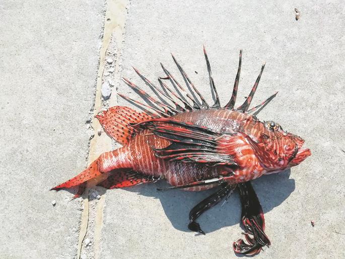 Πολλά ψάρια ραντεβού περιοχή των ΗΠΑ