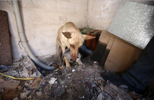Σκυλίτσα σώζει τα κουτάβια της από τη φωτιά στον Υμηττό