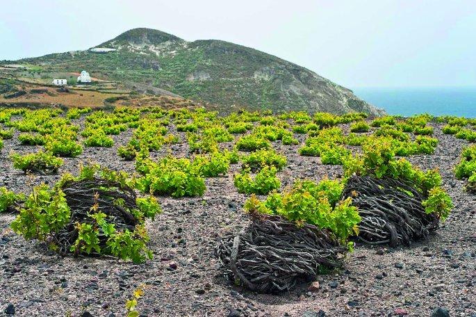 sanotrini-winery-vasily-mulyukin-shutterstock.jpg