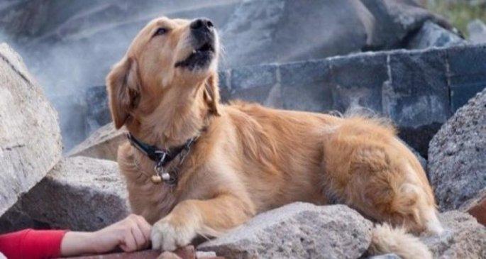Σκύλος σε συντρίμμια σεισμού