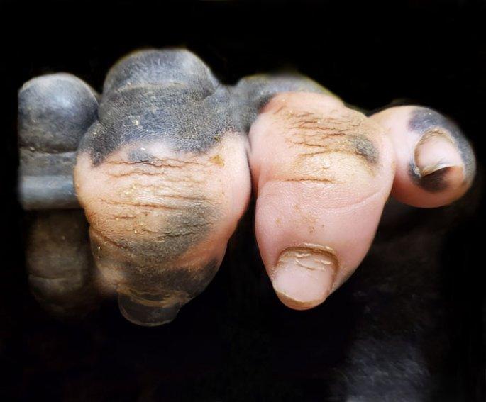 Γορίλας με ανθρώπινα δάχτυλα