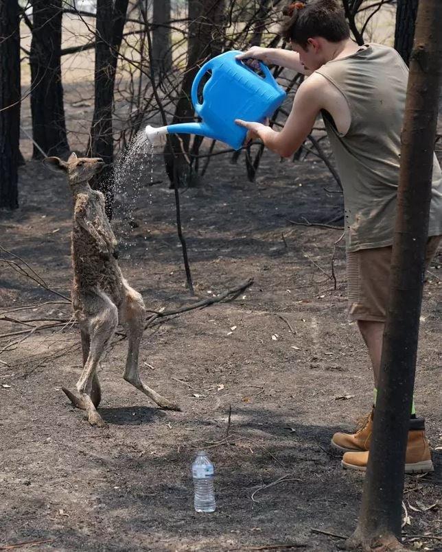 Καγκουρό σώζεται από άνθρωπο/Matrix for Daily Mail Australia