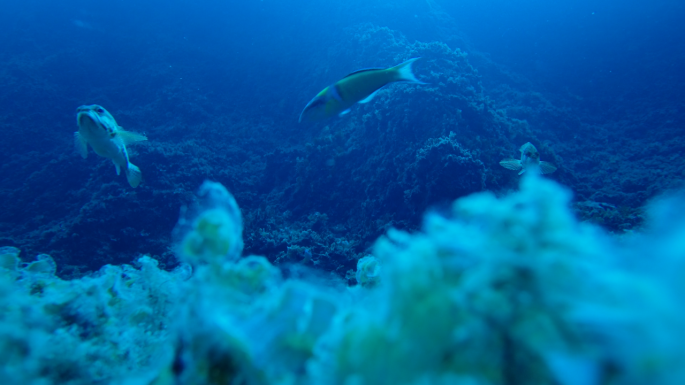 fishlab_underwater_photo_donna_dimarchopoulou.png