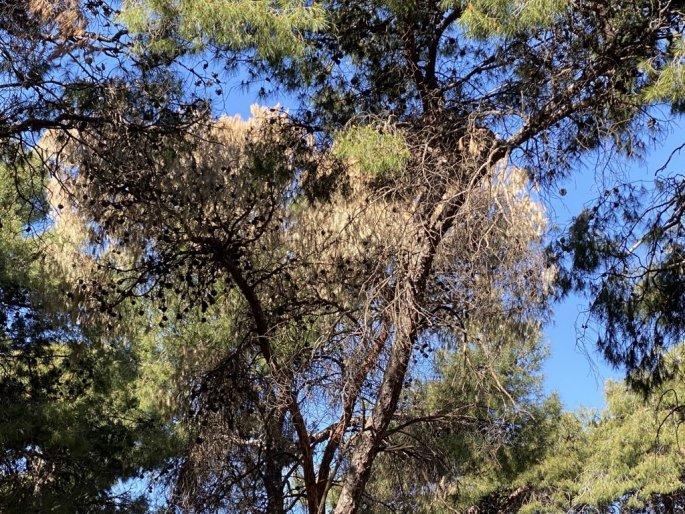 Στο πάρκο της Νέας Ελβετίας στη Θεσσαλονίκη