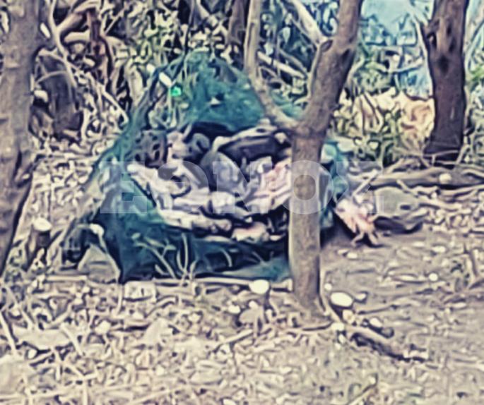 νεκρές χελώνες στη Λίμνη Μπελέτσι