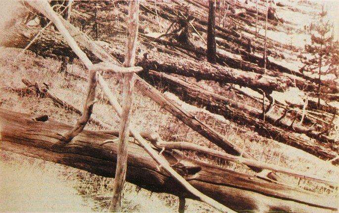 800px-tunguska_event_fallen_trees.jpg