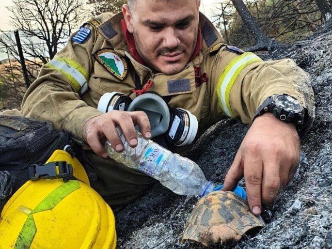 Αχαΐα: Η φωτογραφία από τη φωτιά στη Δροσιά που μας «έκλεψε» την καρδιά- Τι λέει o πυροσβέστης που έγινε viral